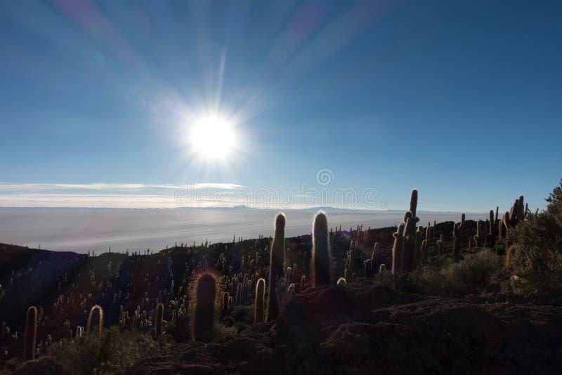Cactus grande en la isla de Incahuasi en la época de la salida del sol imágenes de archivo libres de regalías