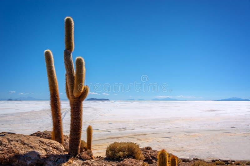 Cactus grande en la isla de Incahuasi, sal plana, Potosi Bolivia de Salar de Uyuni imagenes de archivo