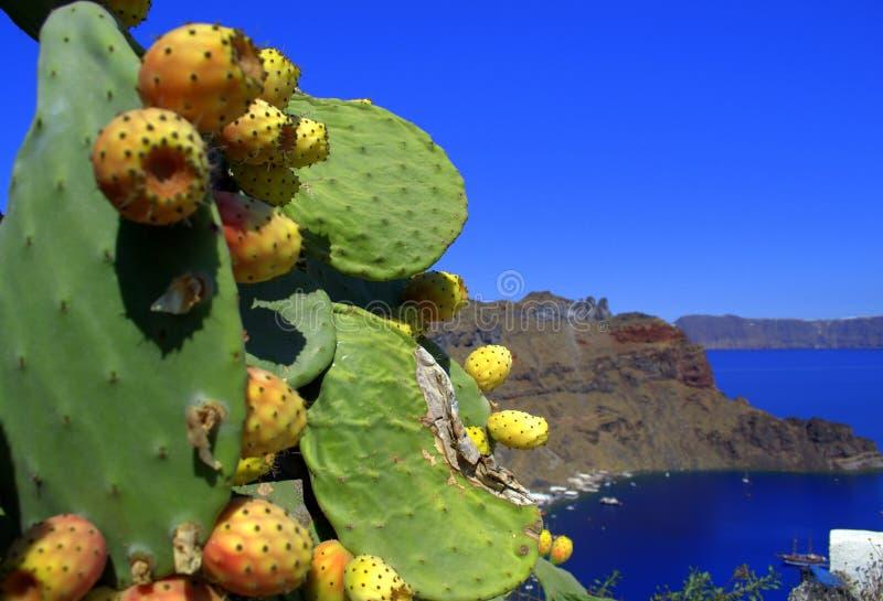 Cactus grec d'île images libres de droits