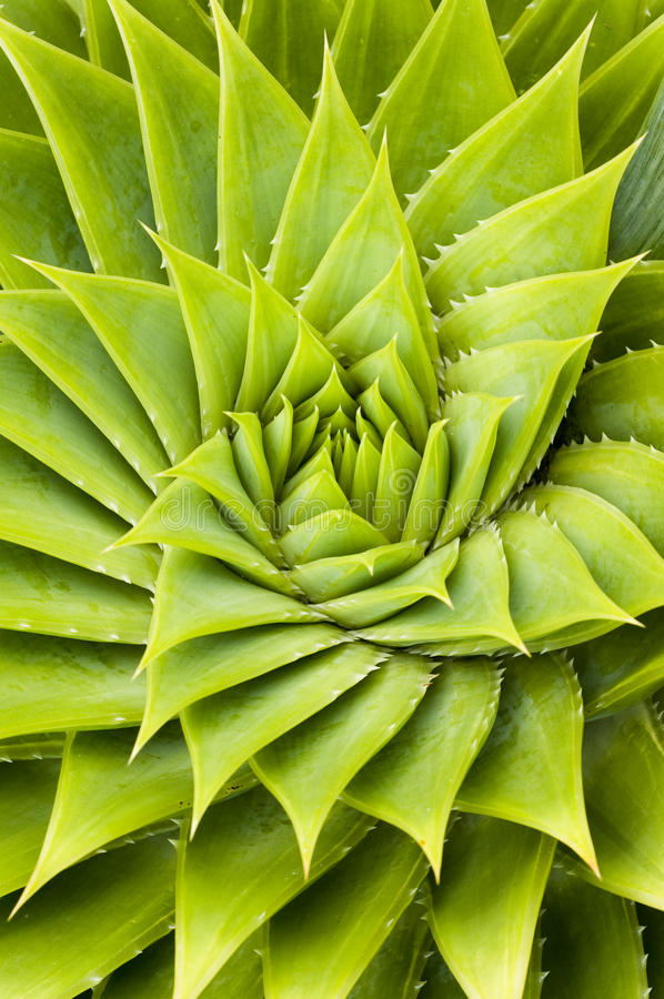 cactus green στοκ εικόνες με δικαίωμα ελεύθερης χρήσης