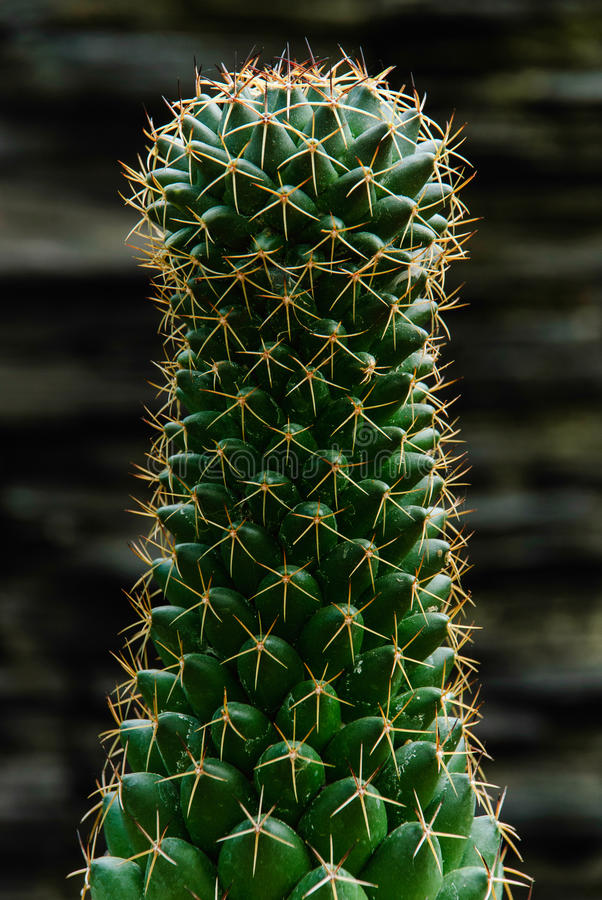 Download The Cactus Stock Photos - Image: 33552193