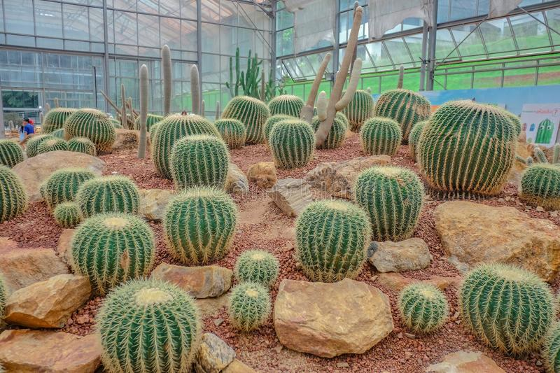 Cactus in Greenhouse at Queen Sirikit botanic garden. Chiangmai city Thailand royalty free stock photos