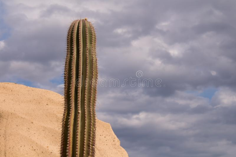 Cactus in the nature and a cloudy sky royalty free stock photography