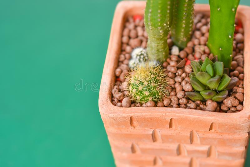 Cactus Grown as ornamental plants Beautiful royalty free stock images
