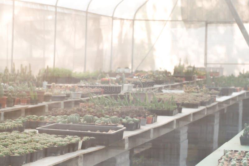 cactus hermoso en el houseplant para el cuarto de ni?os imagen de archivo