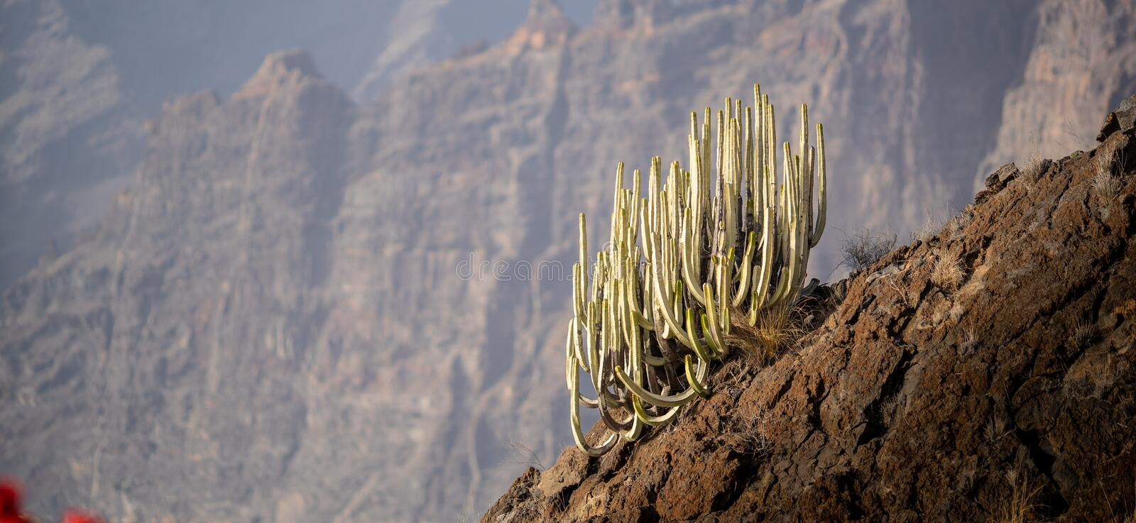Cactus on a hill with bokeh on the background to isolate the cactus and showcase the high altitude and scale stock photography