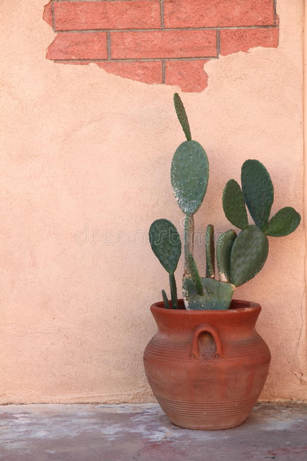 Free Cactus In Terra Cotta Pot Stock Image - 15077741