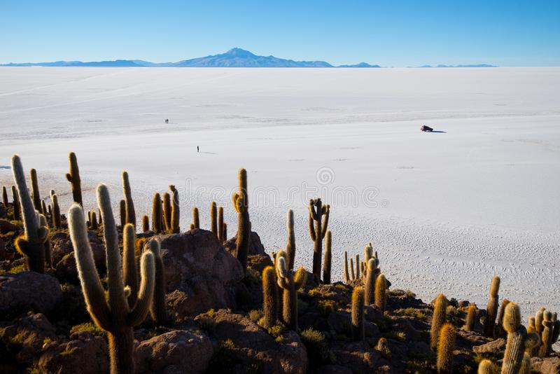 Cactus on Incahuasi island, salt flat Salar de Uyuni, Altiplano. Bolivia royalty free stock image