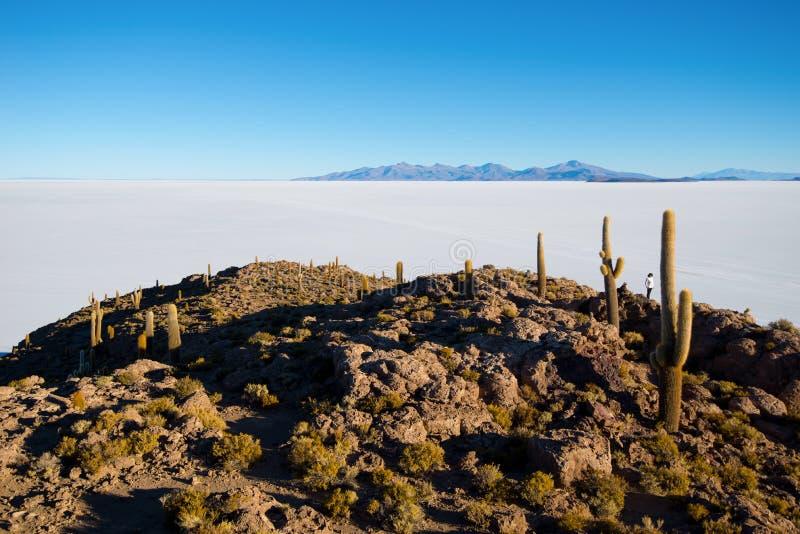Cactus on Incahuasi island, salt flat Salar de Uyuni, Altiplano. Bolivia stock images