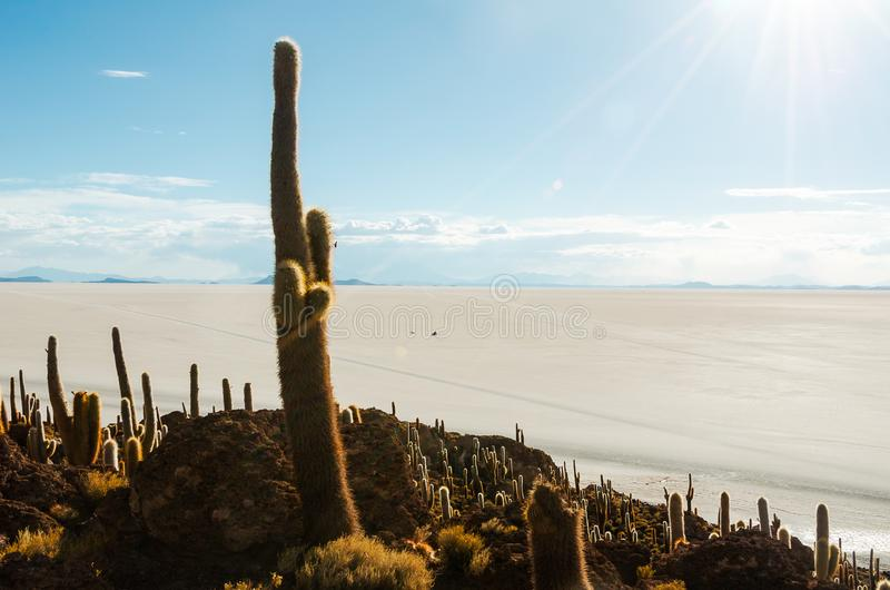 Cactus island in the Bolivian salt flat of Uyuni. Giant cactuses on a hill in the middle of a salt flat desert Uyuni in Bolivia, island, sunny, vastness stock photography