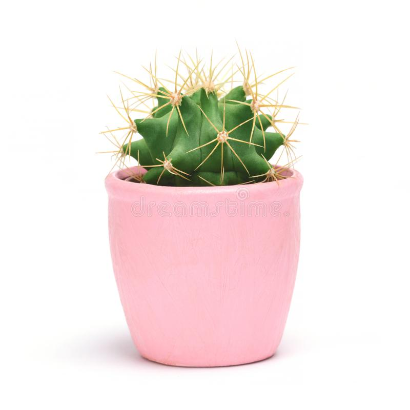 Cactus isolated with clipping path. Closeup Cacti front view in pink ceramic pot white background. Collection. stock photography
