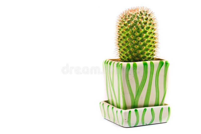 Cactus Isolated On White Background. A green cactus on the basin isolated on white background stock photography