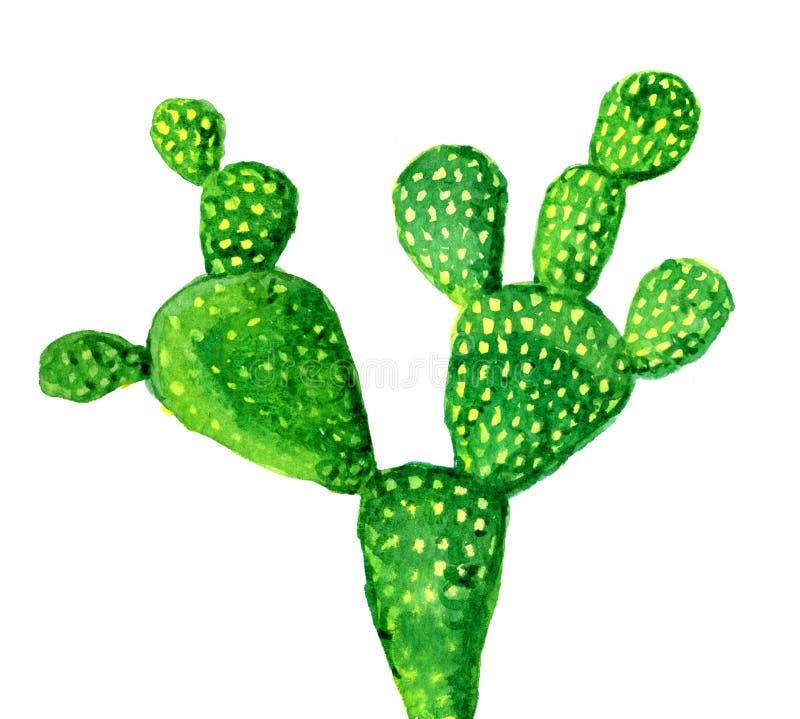 Cactus isolato su bianco, illustrazione dell'acquerello illustrazione di stock