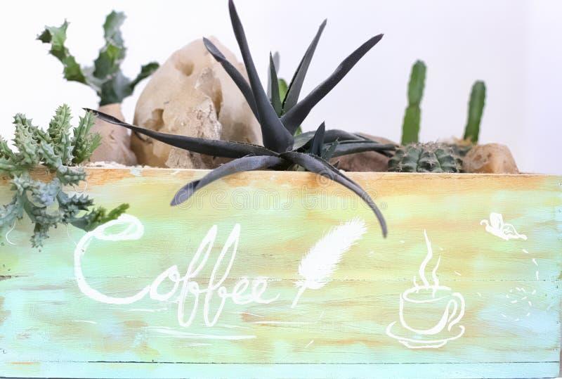 Cactus in koffiewinkel stock afbeeldingen