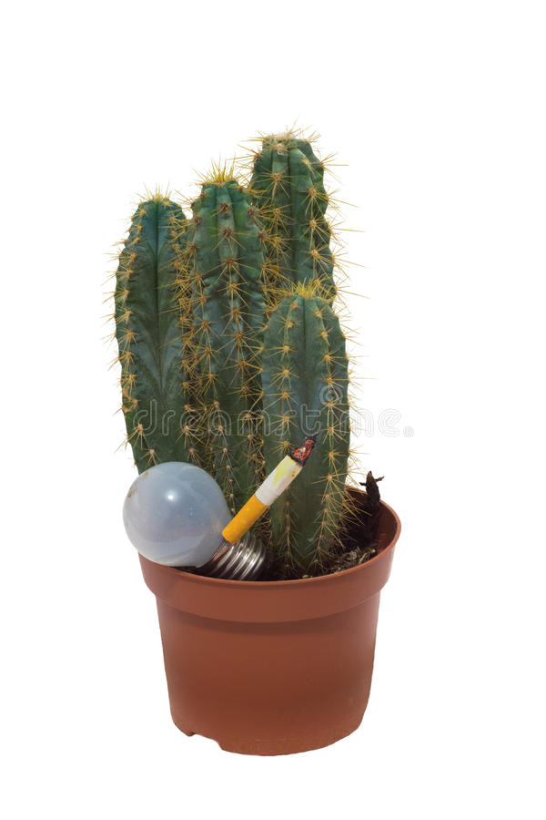 Cactus and lamp with a cigarette royalty free stock images