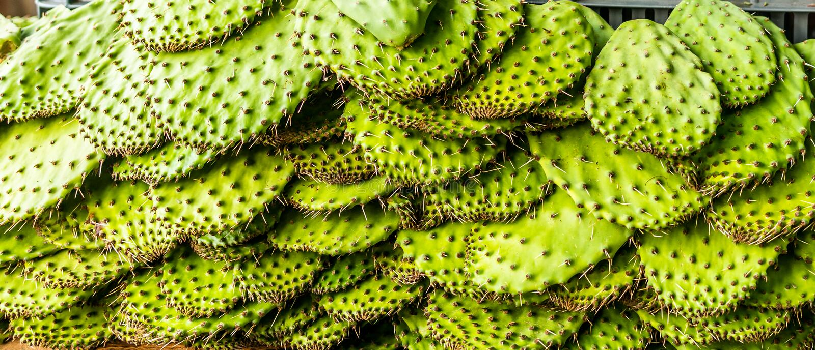 Cactus leaves in a market in Mexico. In the morning royalty free stock images