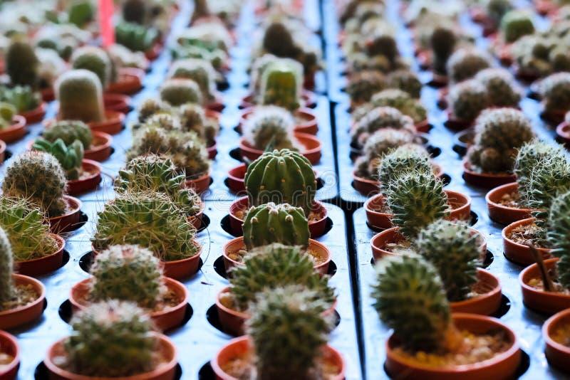 The Cactus stock image