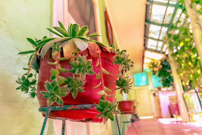 Cactus méditerranéen dans le pot rouge images libres de droits