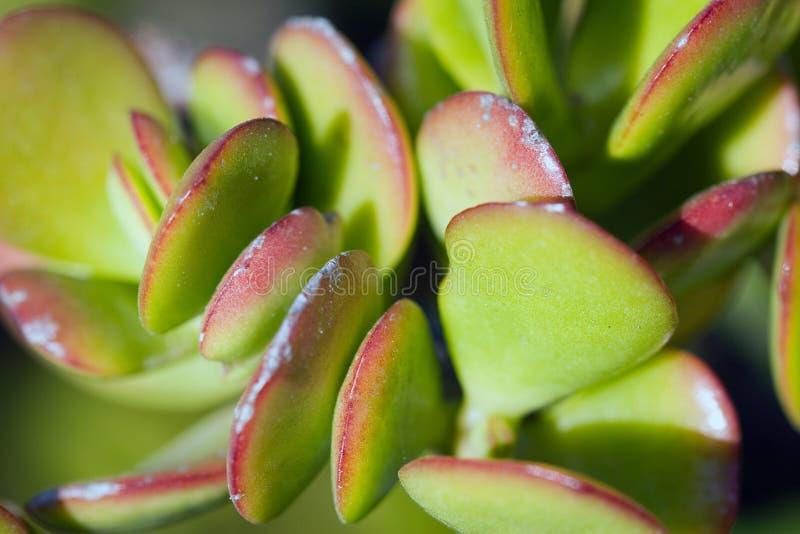 Cactus macro stock images
