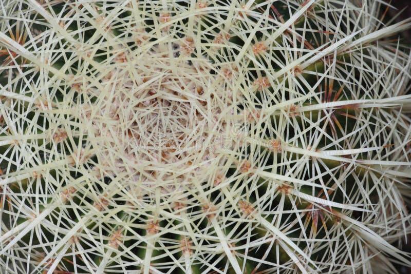 Download Cactus macro stock photo. Image of close, cactus, plant - 23659720