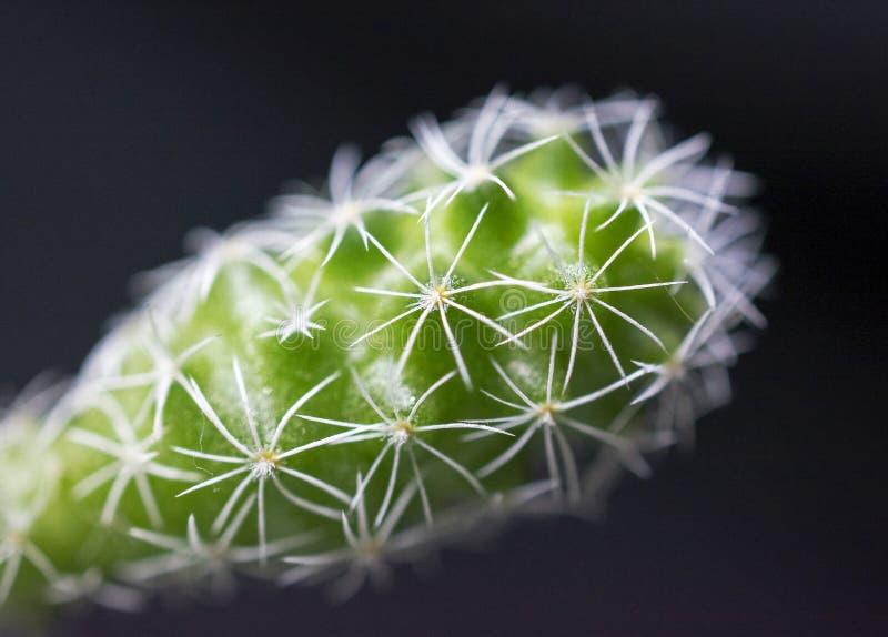 Cactus (macro) fotos de archivo