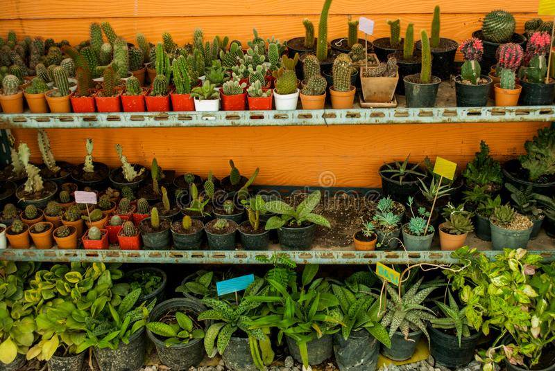 Cactus and many varieties of plants in pots stock photos