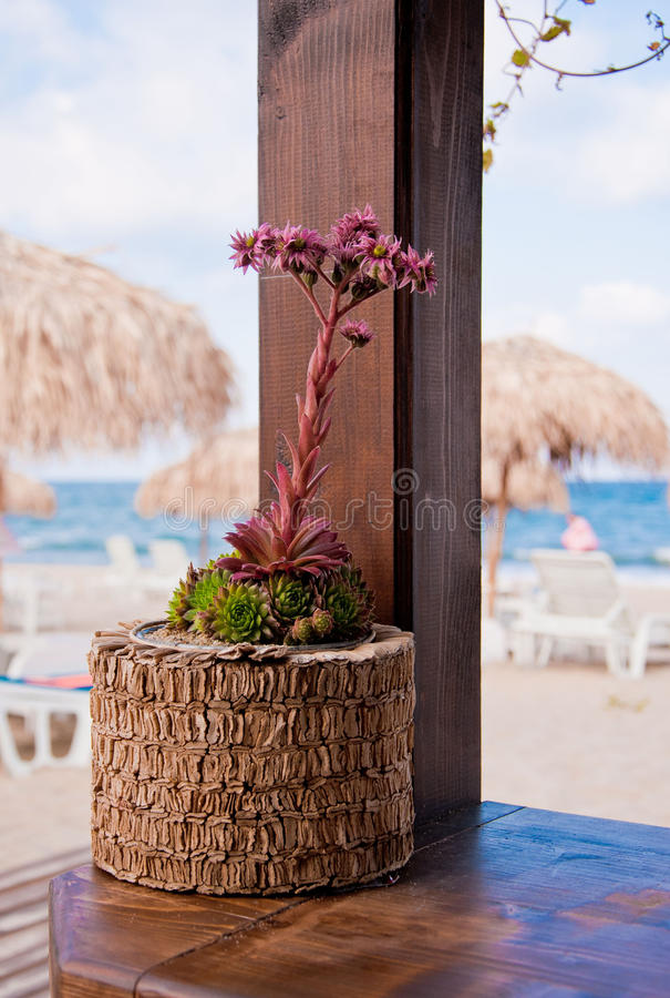 Cactus meraviglioso del fiore vicino al mare fotografia stock libera da diritti