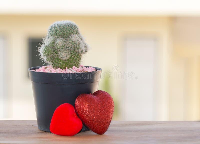 Cactus met hart op houten lijst royalty-vrije stock afbeelding