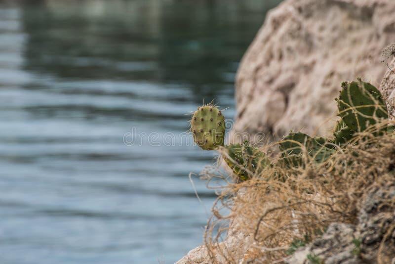 Cactus met overzees op de achtergrond royalty-vrije stock foto's