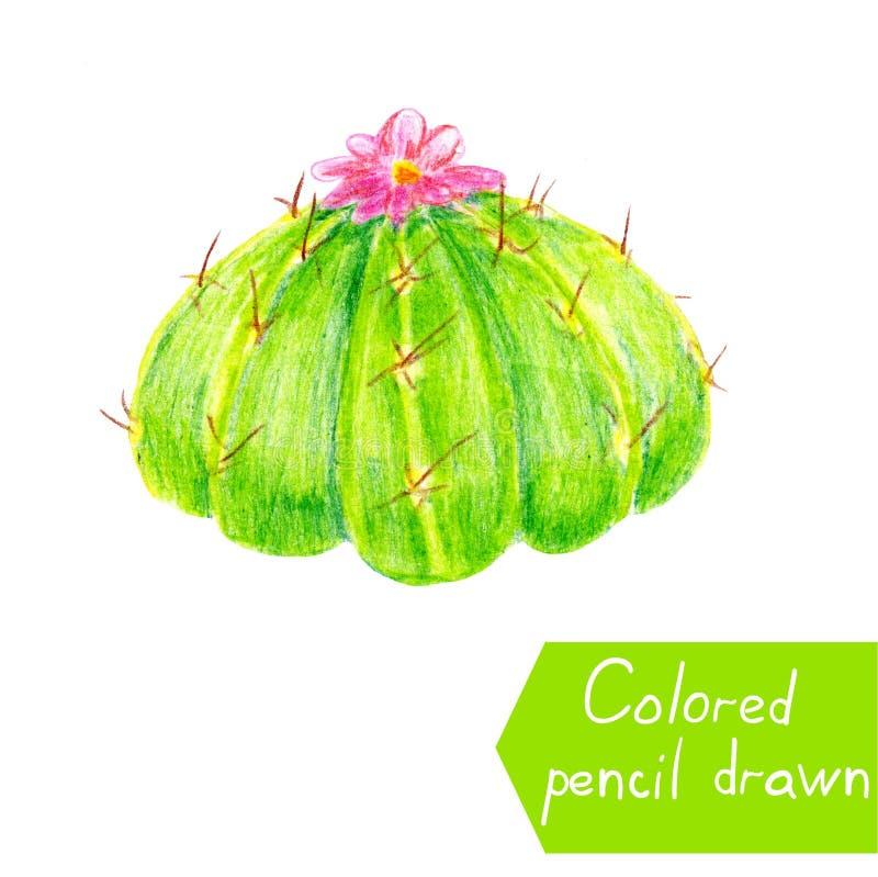 Cactus mexicain avec la fleur rose Illustration de trame des mains peintes par cactus illustration libre de droits