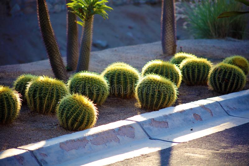 Cactus in Mexico Los Cabos plant 50 megapixels picture. Ultra high definition stock photos