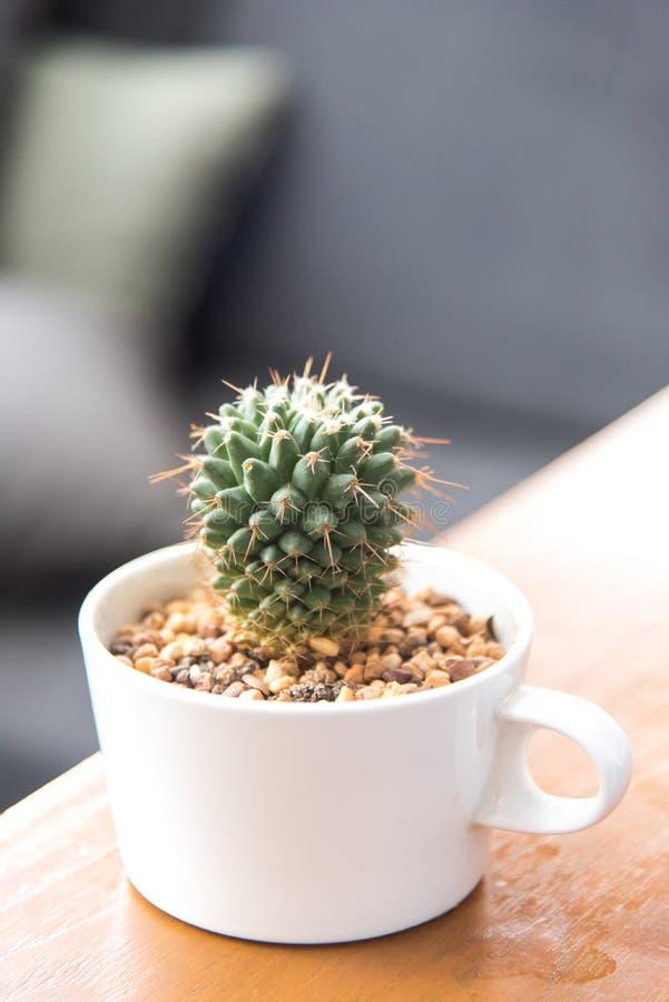cactus mignon dans la tasse de café blanc photos stock