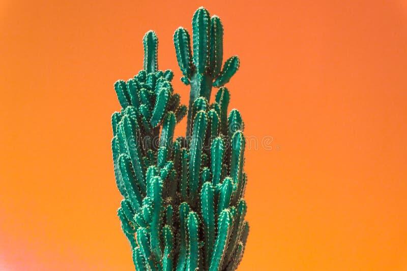 Cactus. Minimal creative stillife on pastel orange. Background. empty space nature royalty free stock image
