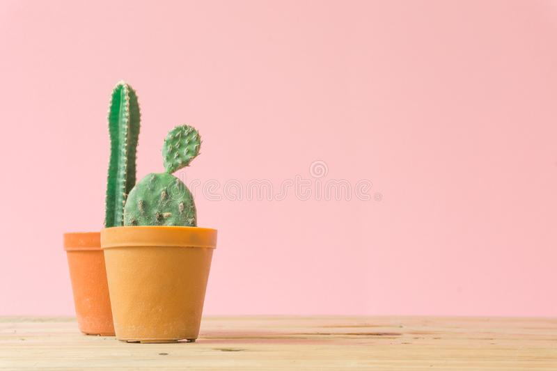 Cactus. Minimal creative stillife on pink pastel background. Empty space royalty free stock photography