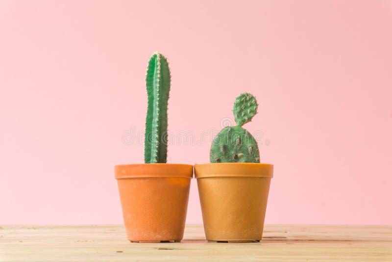 Cactus. Minimal creative stillife on pink pastel background. royalty free stock photo