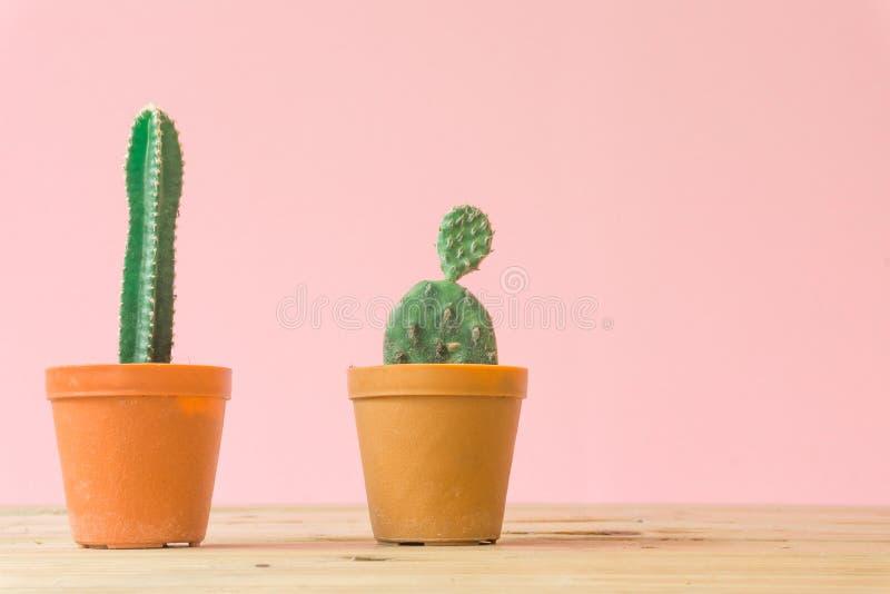 Cactus. Minimal creative stillife on pink pastel background. stock photo