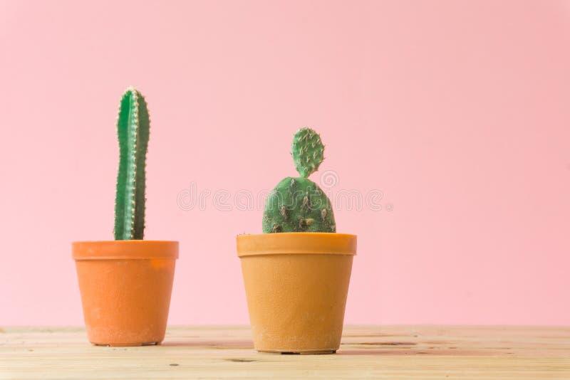 Cactus. Minimal creative stillife on pink pastel background. stock image