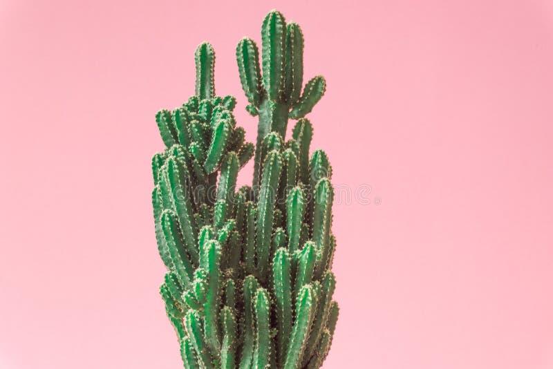 Cactus. Minimal creative stillife on pink pastel background. royalty free stock photos