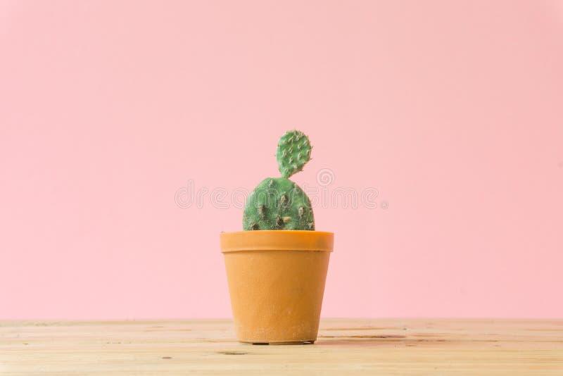 Cactus. Minimal creative stillife on pink pastel background. royalty free stock image