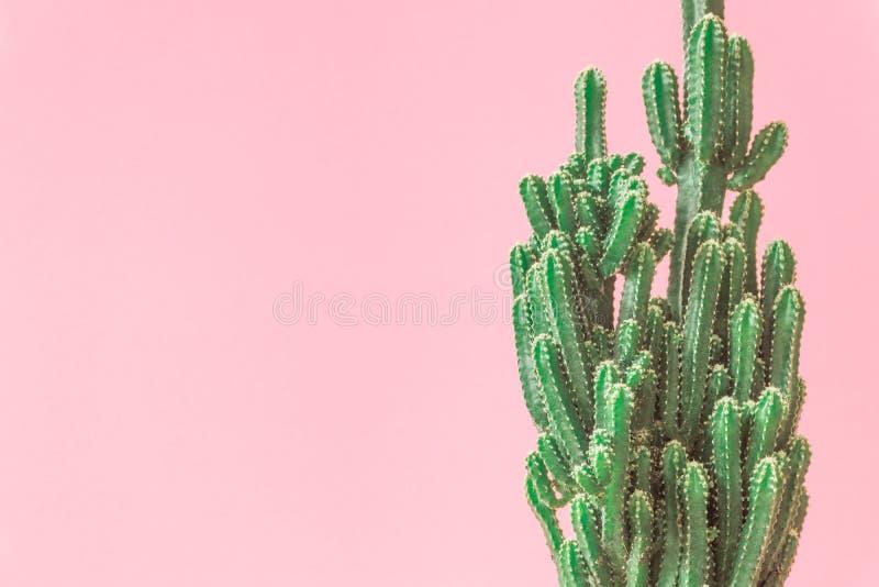 Cactus. Minimal creative stillife on pink pastel background. Empty space royalty free stock photo