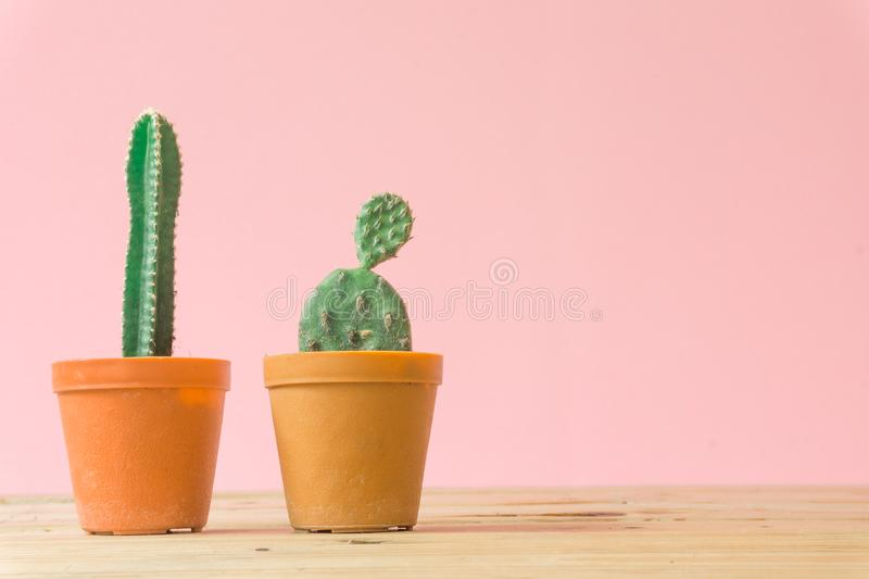 Cactus. Minimal creative stillife on pink pastel background. royalty free stock image