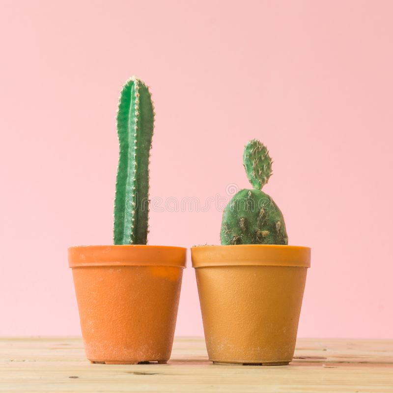 Cactus. Minimal creative stillife on pink pastel background. stock photos