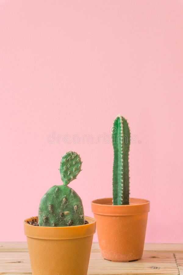 Cactus. Minimal creative stillife on pink pastel background. stock photography