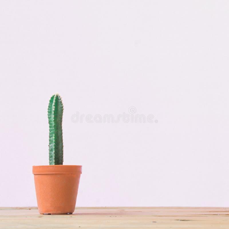 Cactus. Minimal creative stillife on White  background. royalty free stock image