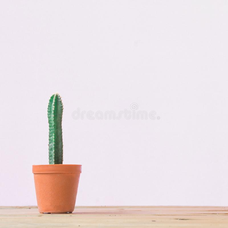Cactus. Minimal creative stillife on White  background. Cactus. Minimal creative stillife on White background. empty space royalty free stock image