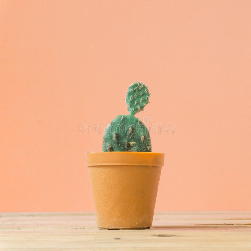 Cactus. Minimal creative stillife on wooden table and pastel orange. Background. empty space nature royalty free stock images