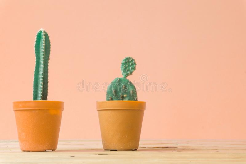 Cactus. Minimal creative stillife on wooden table and pastel orange. Background. empty space nature royalty free stock photo