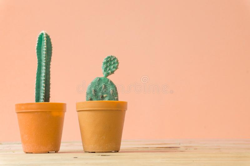 Cactus. Minimal creative stillife on wooden table and pastel orange royalty free stock photography