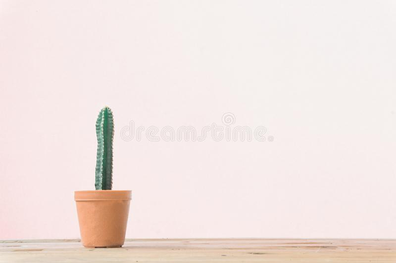 Cactus. Minimal creative stillife on wooden table and white background. Empty space nature stock images
