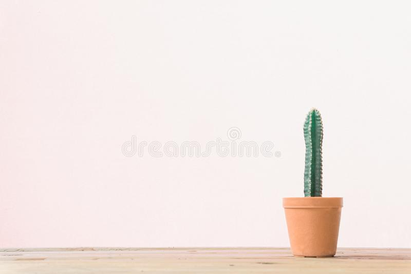 Cactus. Minimal creative stillife on wooden table and white background. Empty space nature royalty free stock photo
